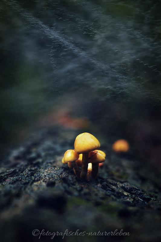 Pilzfamilie auf Baumstamm