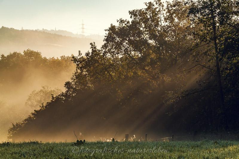 Bäume im Sonnenlicht mit Nebel