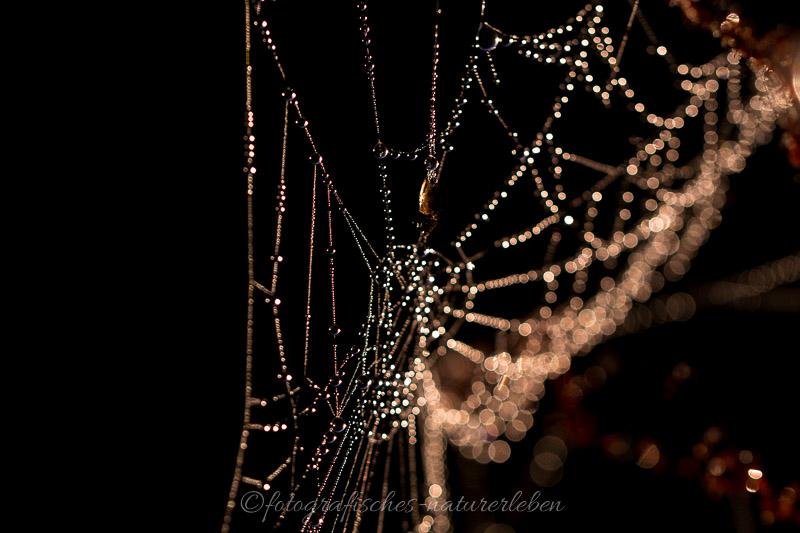 Perlenkette im Spinnennetz