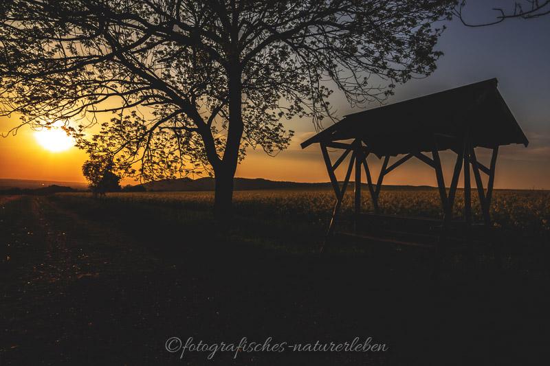 Wiese und Baum im Sonnenuntergang bei Gegenlicht