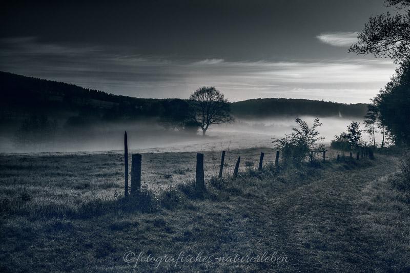 Waldweg, Bäume und Felder in Nebel gehüllt