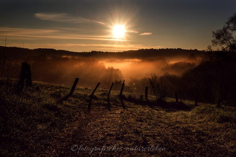 Walweg bei Sonnenaufgang im Nebel