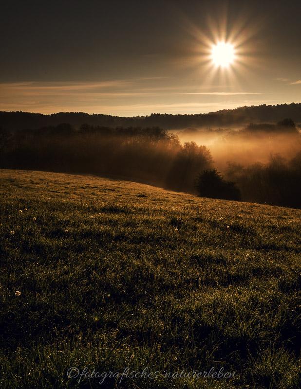 Wiesen und Wald im Sonnenaufgang mit Nebel