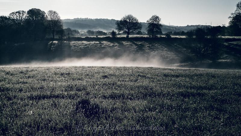 Wiesen und Bäume im Nebel