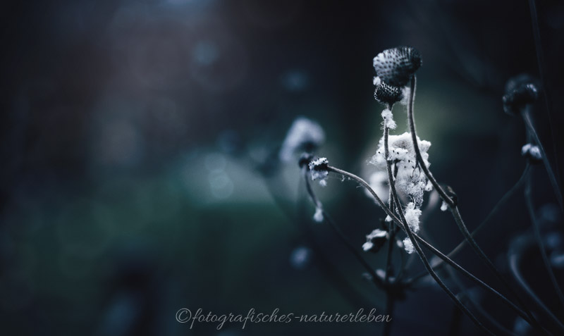 verwelkte Pflanzen