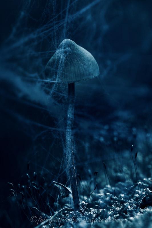 Pilz mit Spinnweben