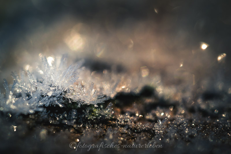 Eiskristalle im Morgenlicht